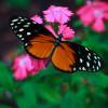Butterfly World, Sockton-on-Tees