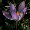 Fletcher Moss Botanical Gardens