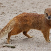 Galloway Wildlife Conservation Park