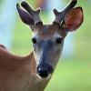 Jedforest Deer & Farm Park