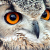 Kirkleatham Owl Centre