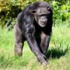 Blair Drummond Safari and Adventure Park