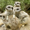 Drusilla's Zoo Park